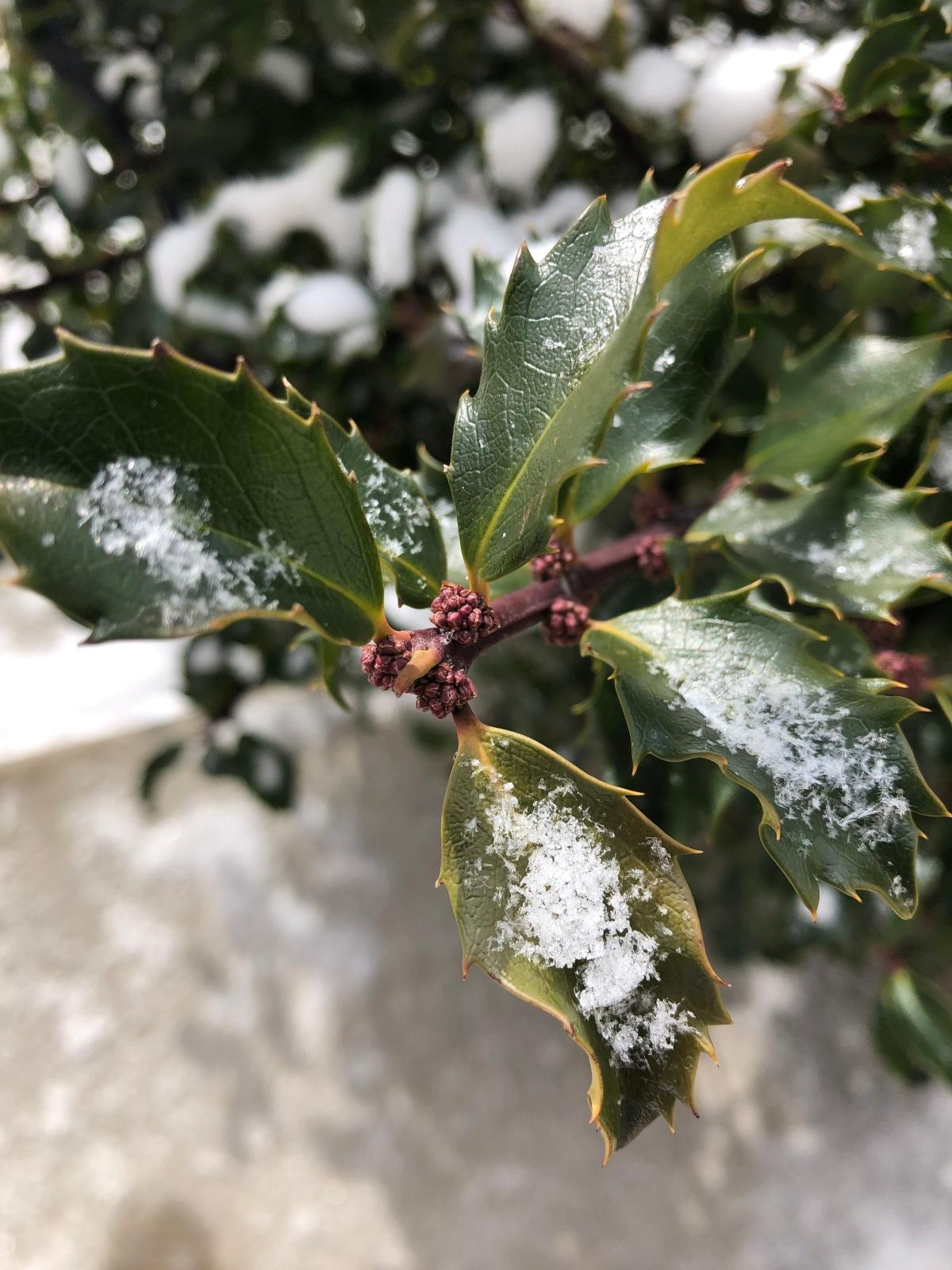 Growing Faith: 10~The SnowflakeLesson
